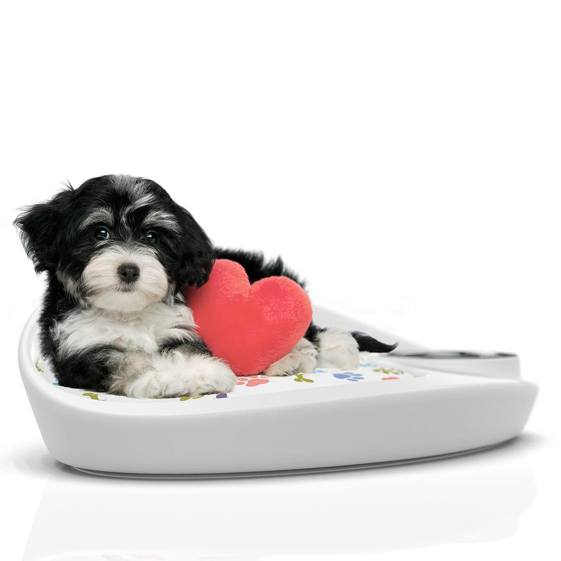 Nana cuccia Pet Bed Designer Alberto De Siati